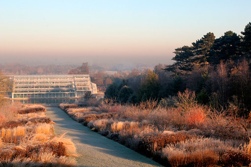 Wisley grass borders in December  Photo : Royal Horticultural Society