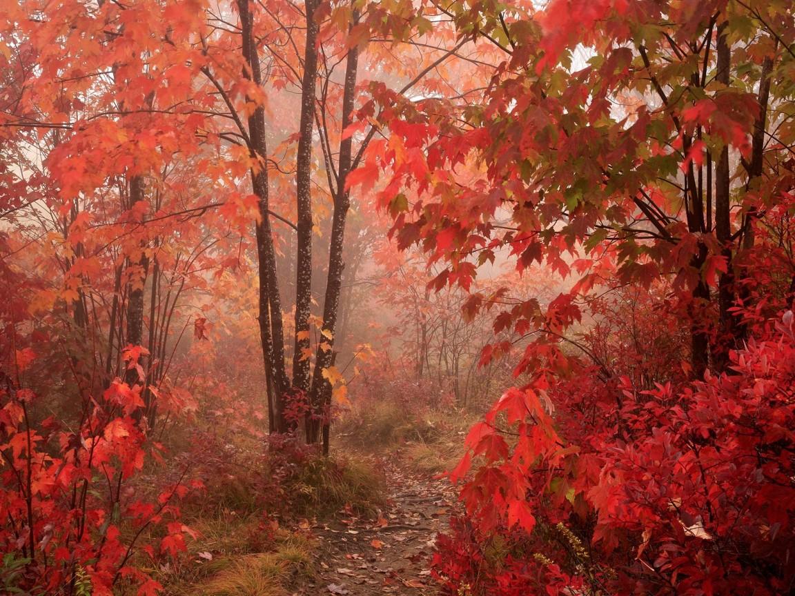 Mist and foliage