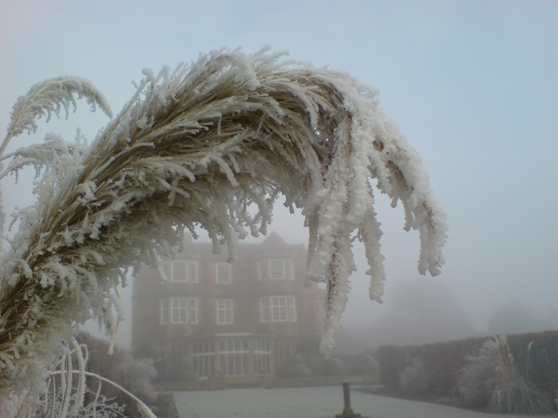 Photo: Goldsborough Hall viewed behind frost-encrusted grasses
