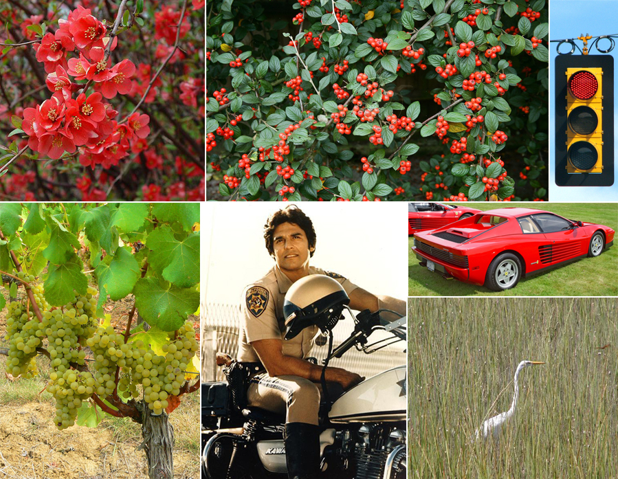 Photo, clockwise from top L: Red chaenomeles blossom; cotoneaster berries; inconvenient traffic light; Ferrari Testarossa; Common Egret; Erik Estrada; Sauvignon Blanc grapes