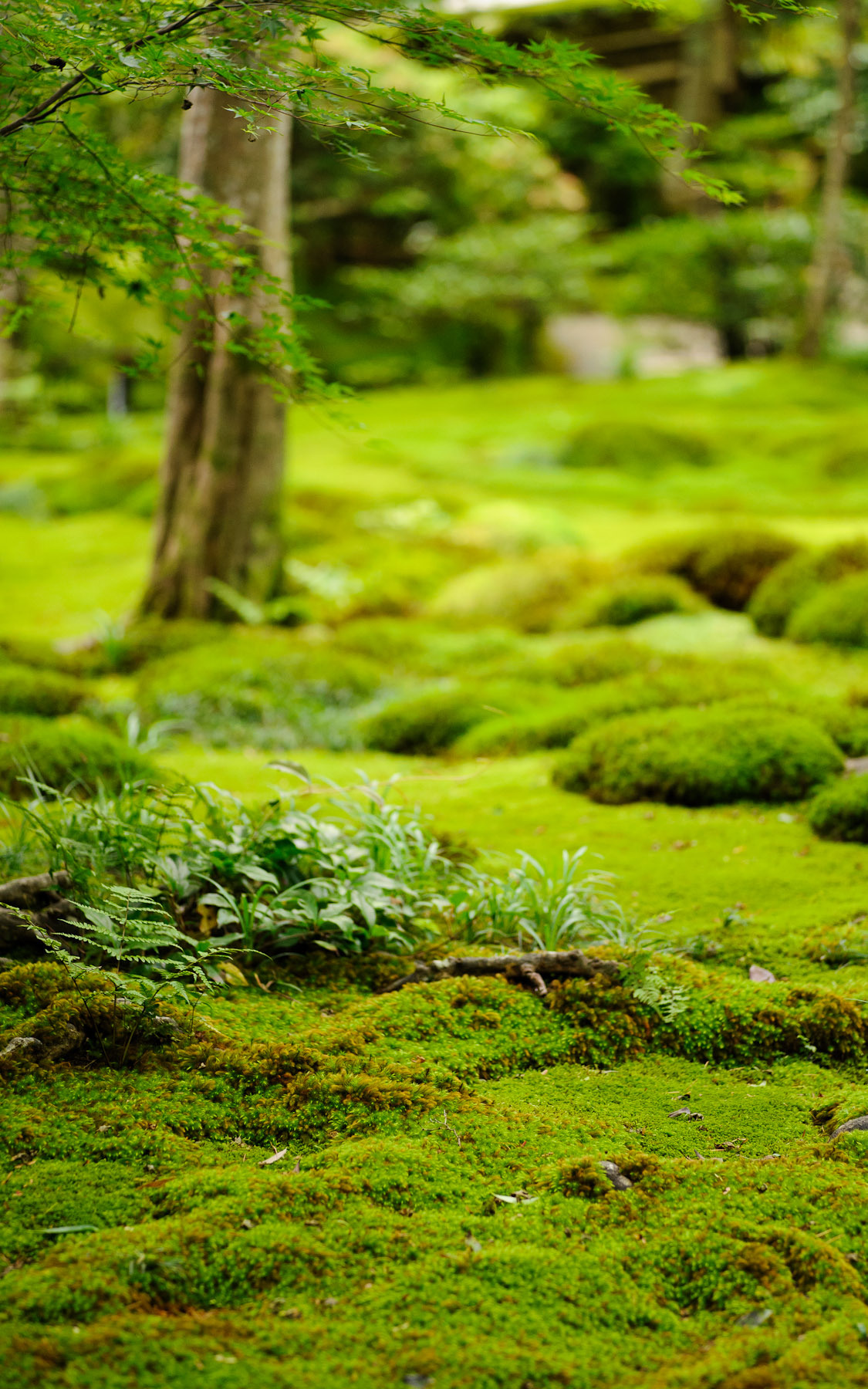 Moss Garden, Gioji Temple, Japan Photo: Jeffrey Friedl, July 2012