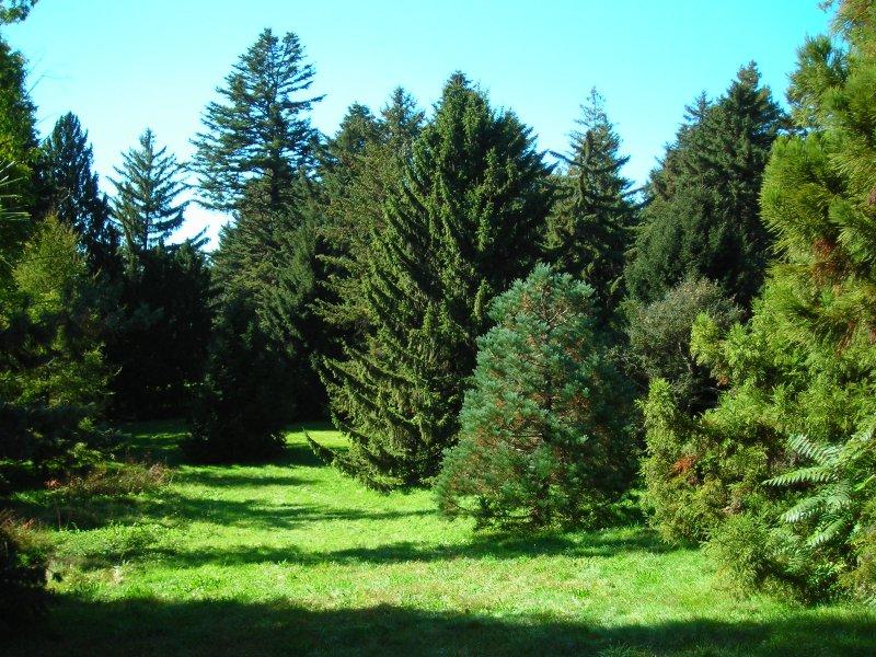 Coniferous garden Photo: frogsonice.com