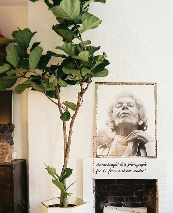 Ficus lyrata in Anna Burke's living room (detail)   Photo: Lonny Mag, March/April 2012