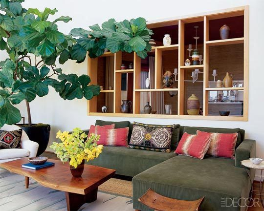Fiddle leaf fig    Photo: Grey Crawford, Elle Decor