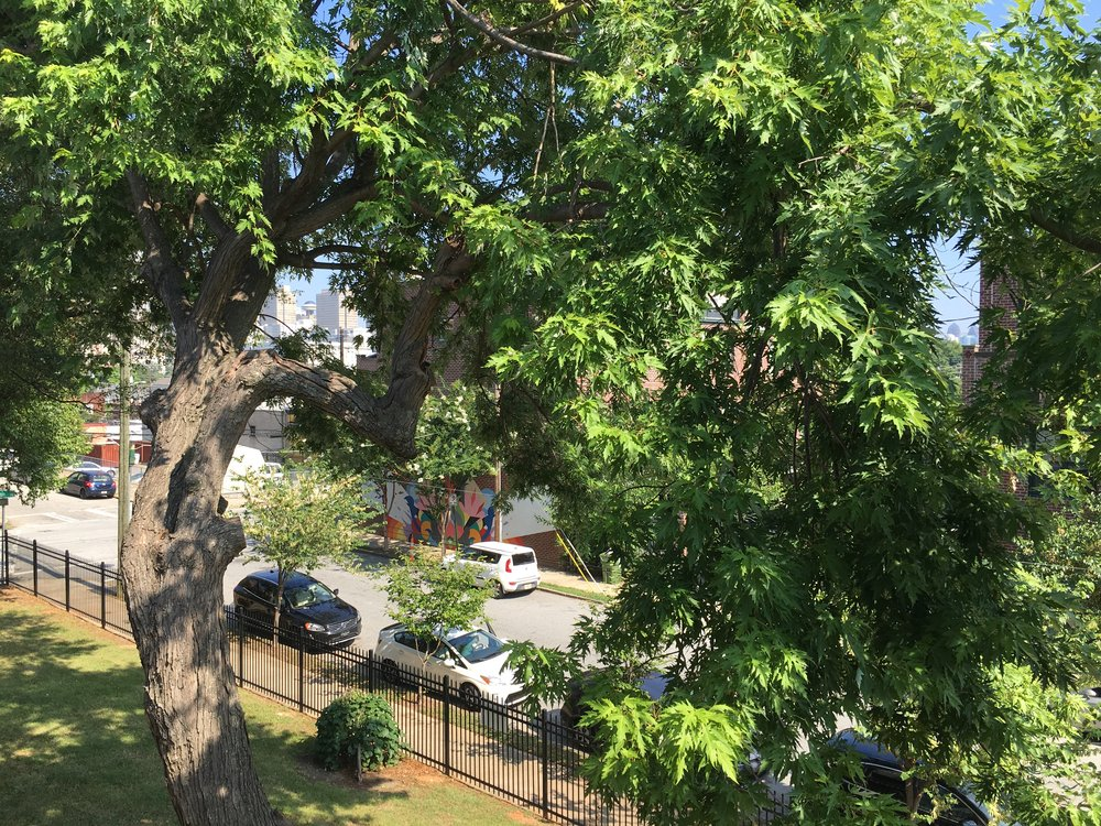 Some of the view from our balcony. Some of these limbs have since broken off from summer thunderstorms which gives us a better view of downtown which you can see in between the branches.