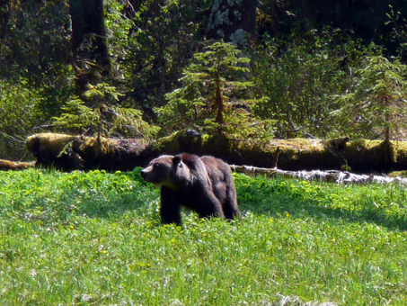 Brown Bear in God's Pocket