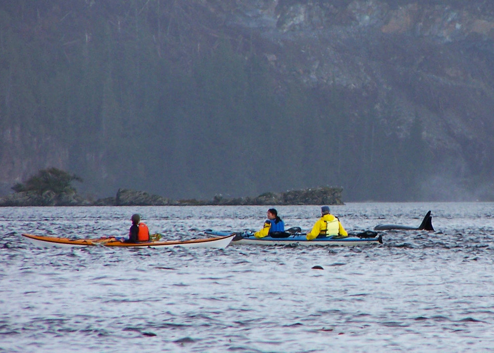 Orcas and Kayakers at Orcas Cove