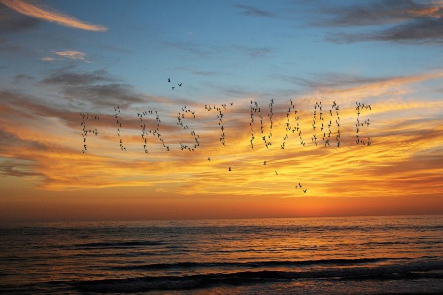Jul - Birds at Sunset