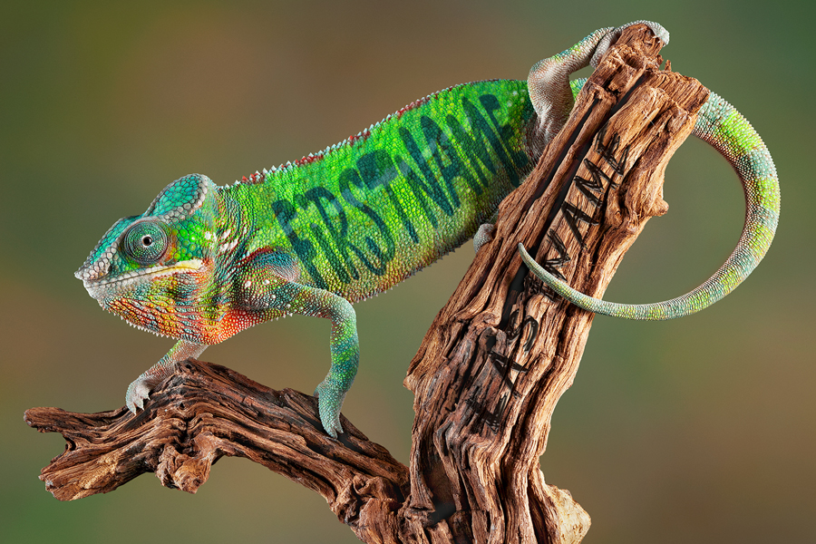 Jun - Chameleon