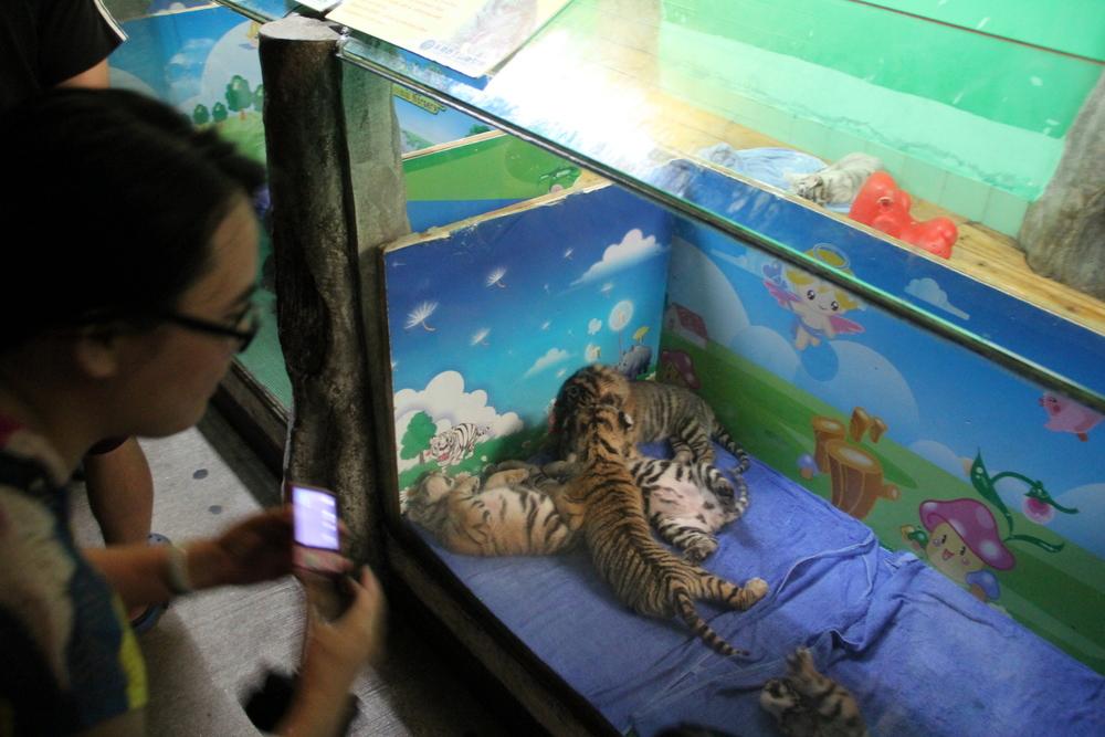 Tiger cub nursery.