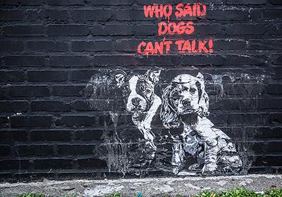 Dogs-0416_web.jpg