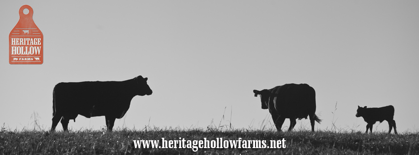 The confirmation we look for in our cows and calves.