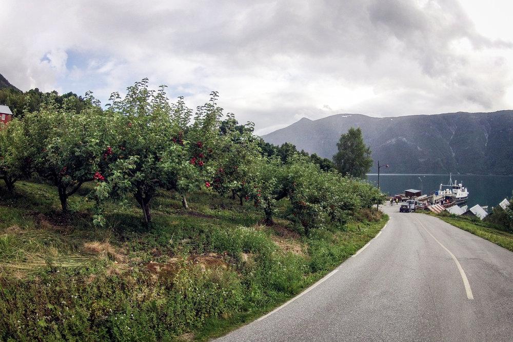 vegtur_lustrafjorden_rundt_urnes.jpg