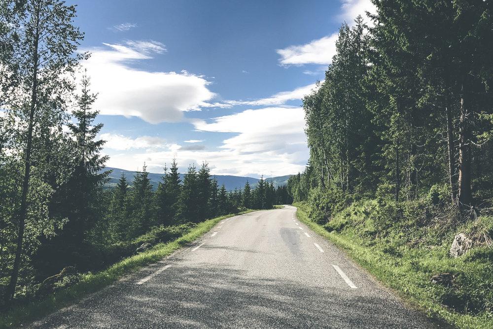 vegtur_synnfjell_forset_torpa_IMG_3573.jpg