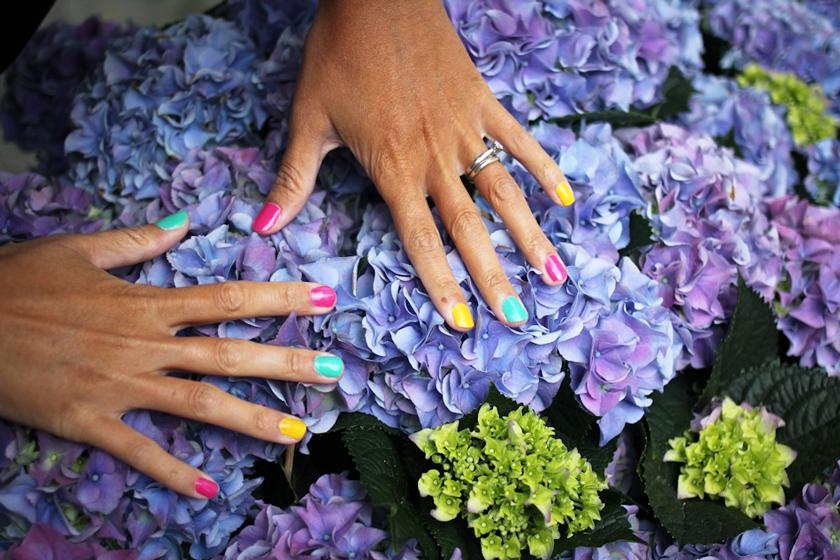 Nail polish, hydrangeas, rainbow nail polish
