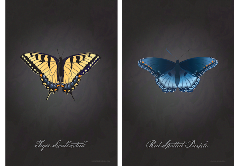 ShenefieldButterflyPair2.png