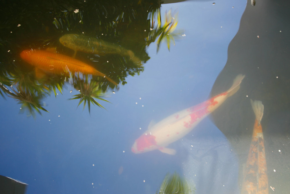 Koi pond at the entrance to the Main House