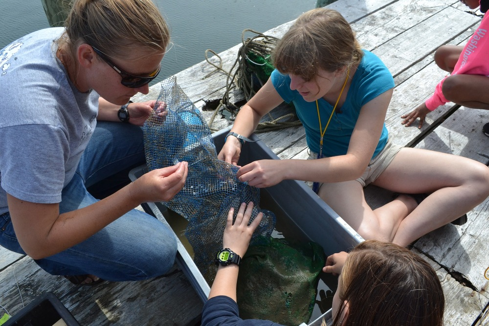 "Students search through scallop ""spat"" bags with Field Research Coordinator, Cait Cleaver"