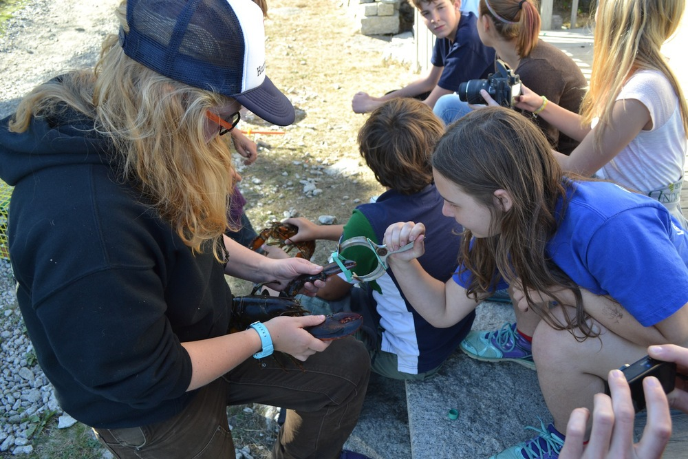 Students learn how to band lobsters