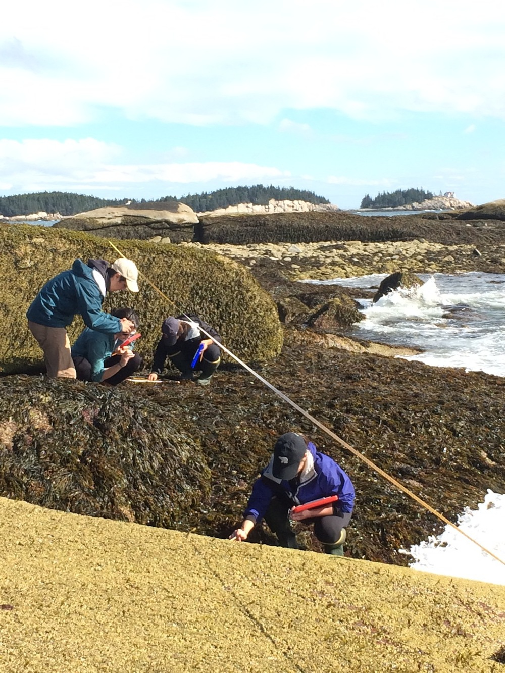 Intertidal Monitoring work