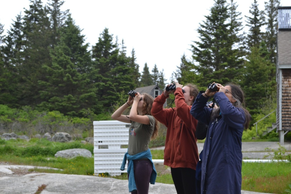 We spied tons of beautiful songbirds including American Redstarts, Northern Parula, Cedar Waxwings, Yellow-rumped Warblers, and Black-Throated Green Warblers!