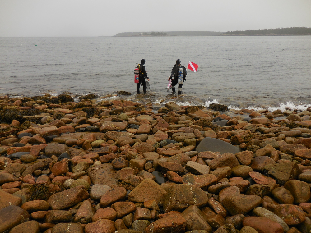 Branwen (left) and Cait (right) get ready to plunge into the cold Acadia waters in search of coralline algae.