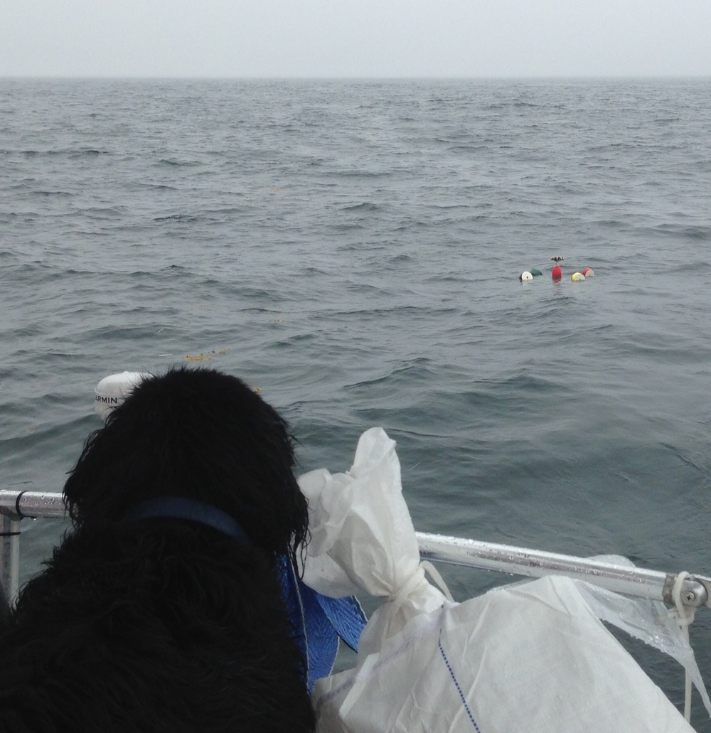 Hickory the dog looks out at the drifter-- now its path will depend on wind, tide, and currents!