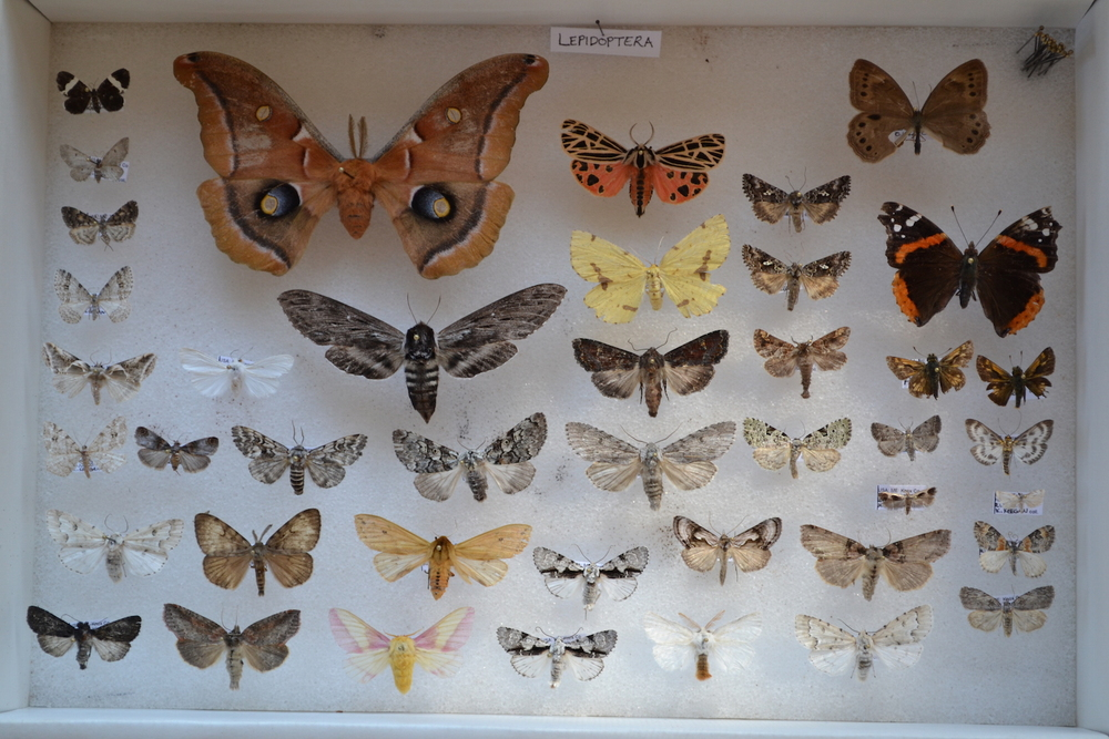 Part of Hurricane's insect collection