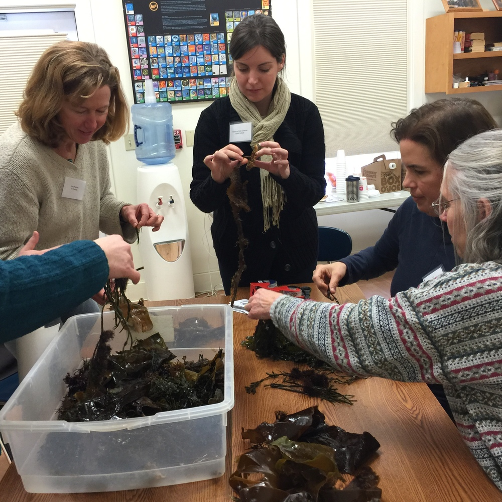 Teachers get up close and personal with all different kinds of seaweeds [Photo credit Yvonne Thomas]