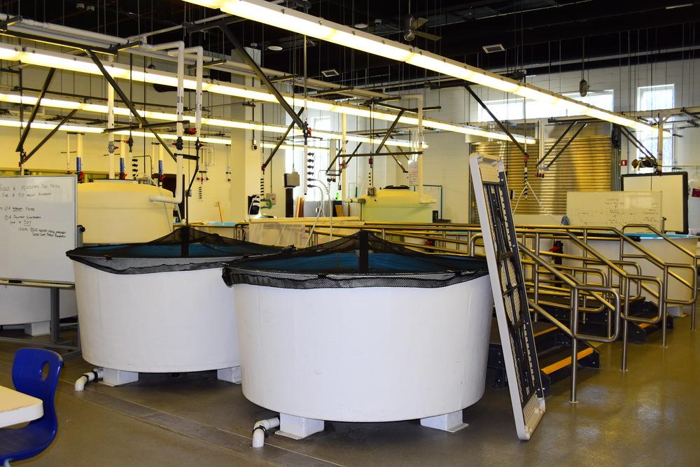 Aquaculture Lab at MSMHS