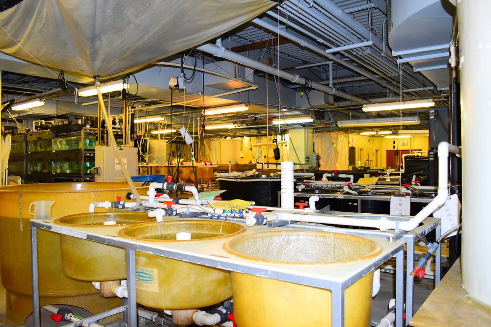 Aquaculture facilities at The Sound School