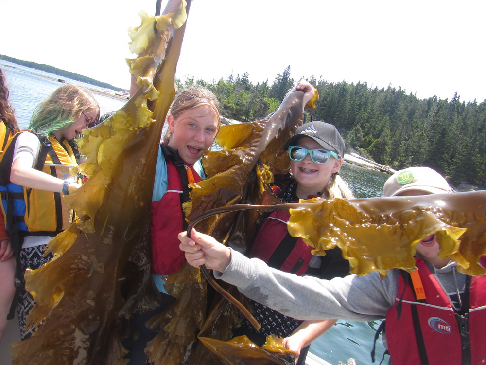 MS Marine Ecology students showing off with their harvested kelp