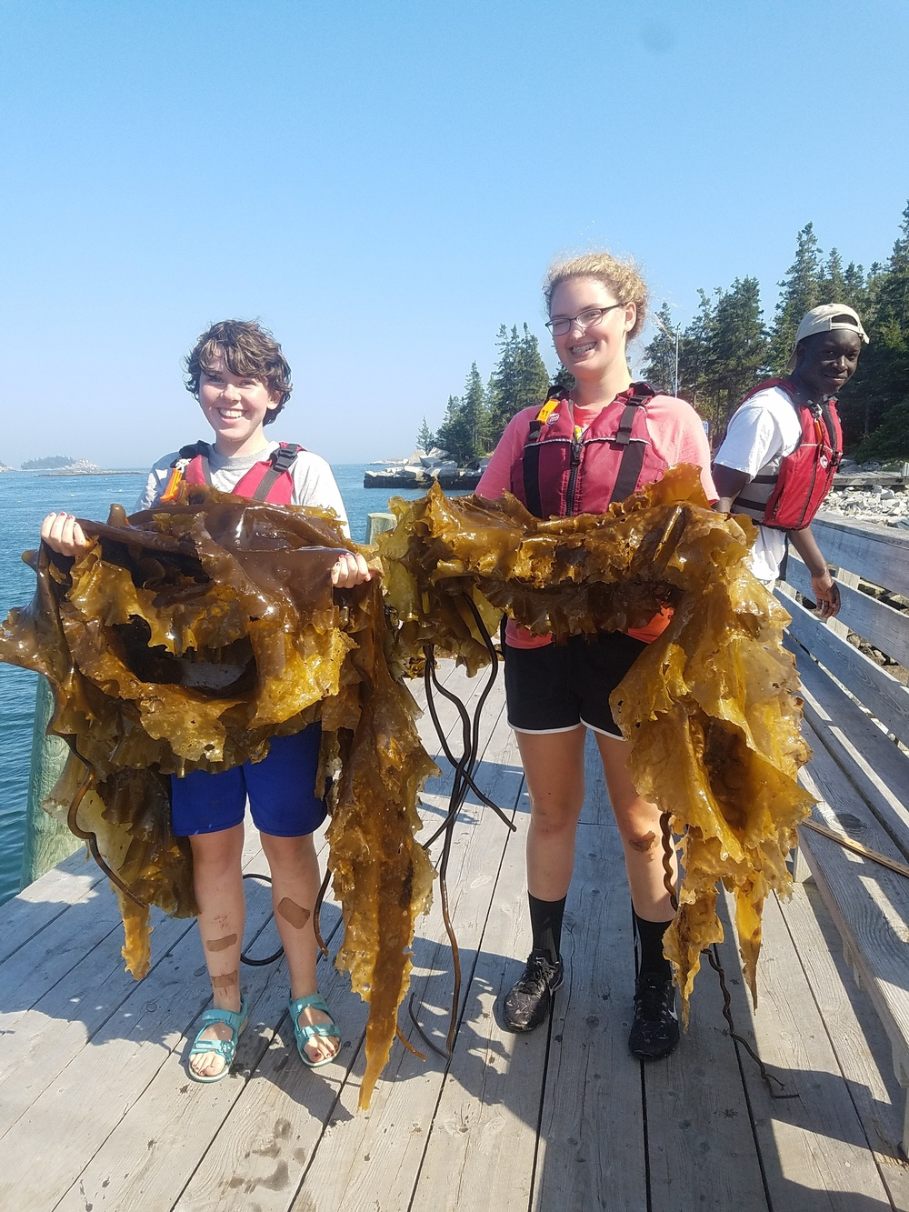 "We made new ""fronds"" during the kelp harvest!"