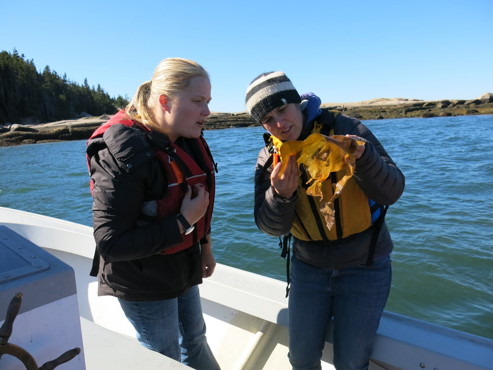 Jenn and Val trying to identify a tunicate that was growing on some of the kelp