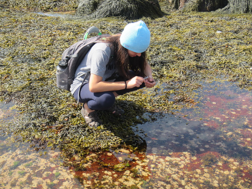 HS_FieldMarine_intertidal.jpg