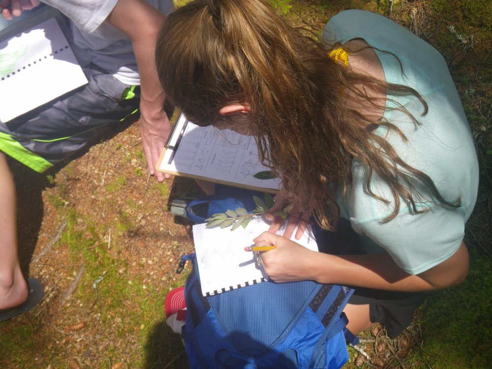 Students practice leaf identification through observation of various leaf characteristics.