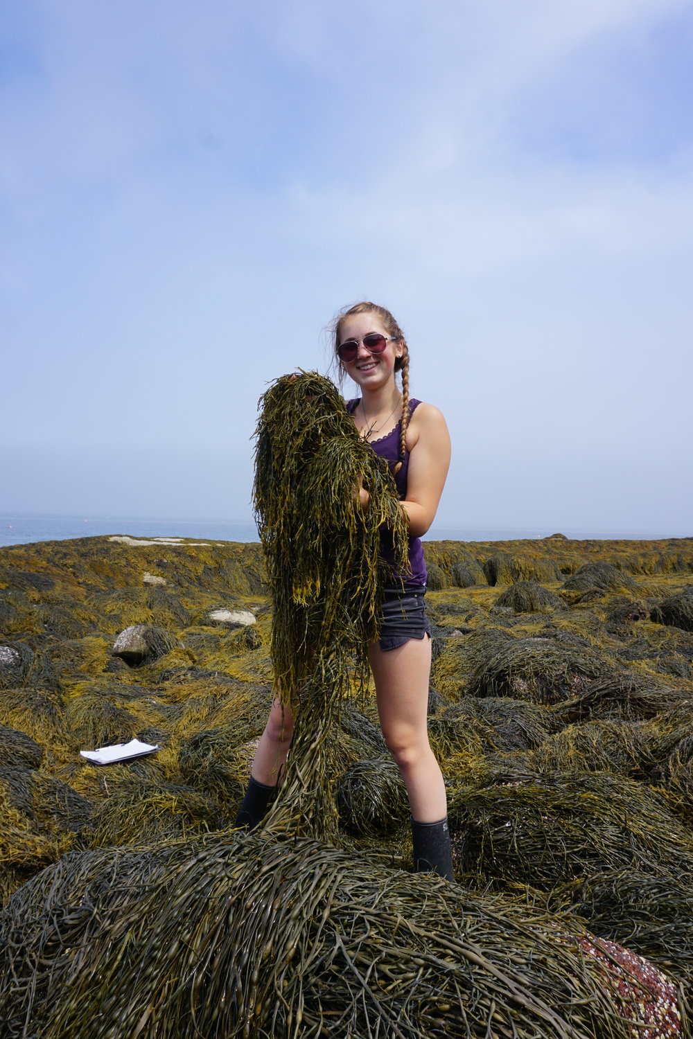- Happy to see so much rockweed!