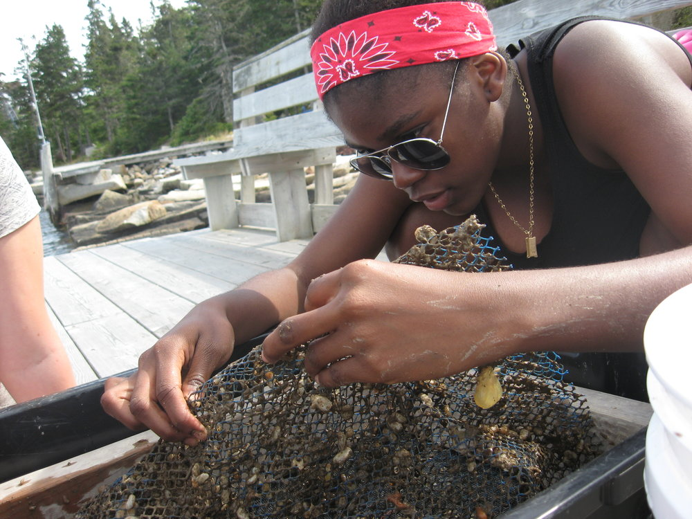 - Island research...sorting baby scallops from our spat bags!