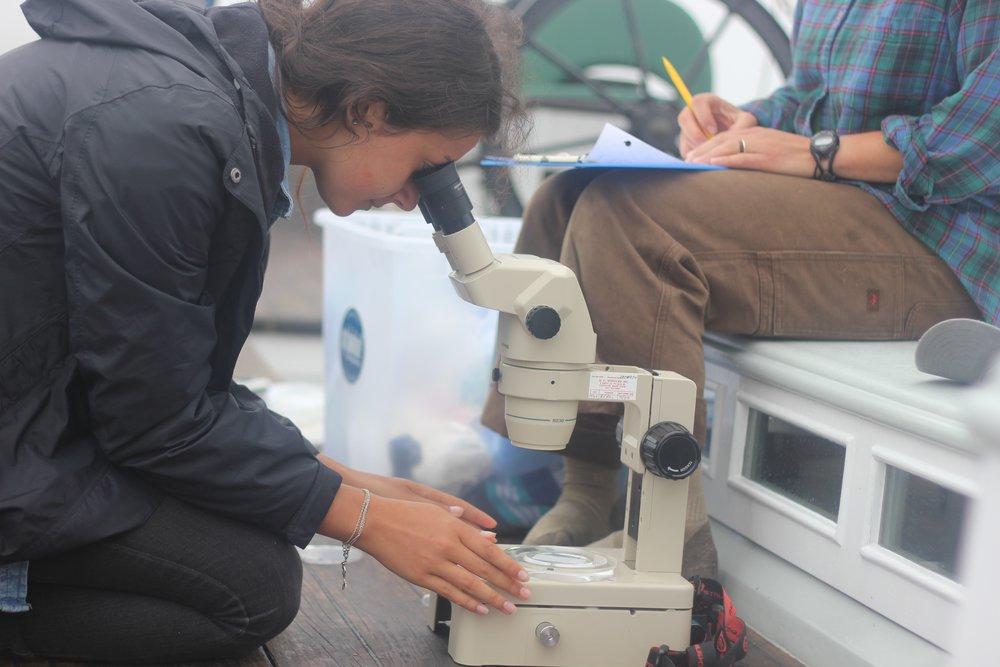 WOTS microscope on board.jpg