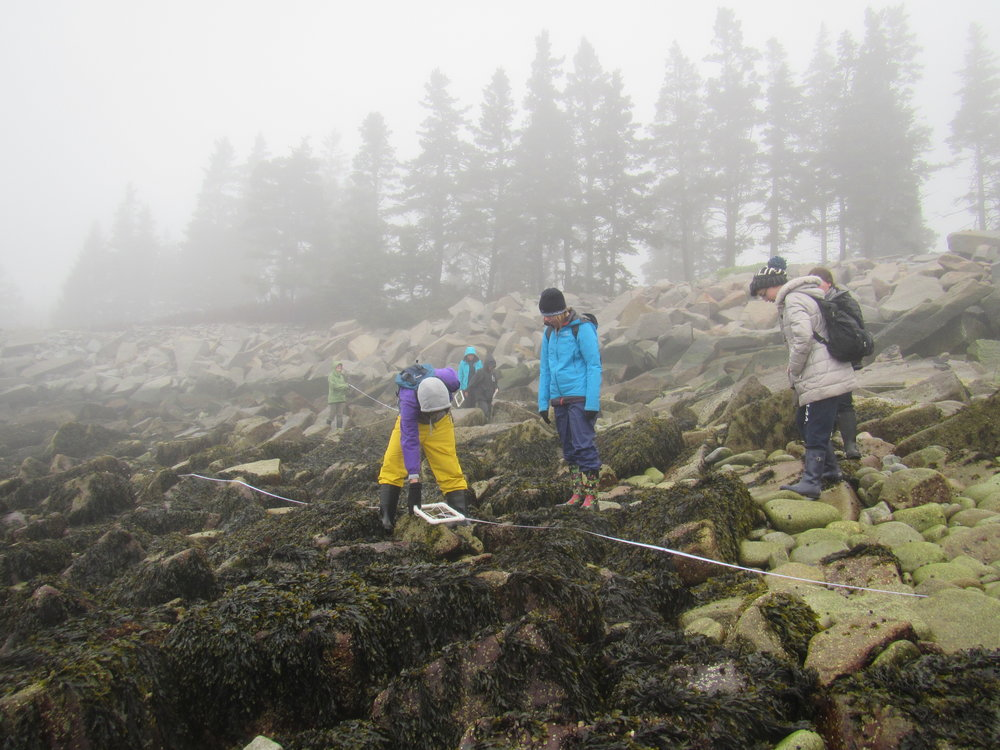 Foggy morning data collection with transects and quadrats.
