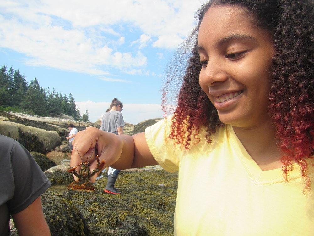Nayeli Perez (WINS student) holding a juvenile lobster on Hurricane Island
