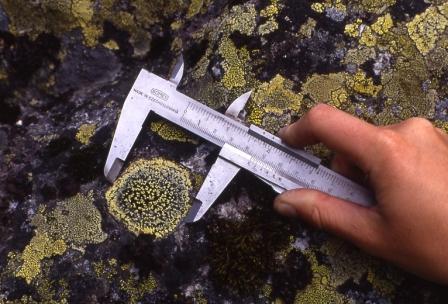 Måling av diameter på kartlav for å datere moreneryggar som breen har avsett. Foto: Norsk Bremuseum