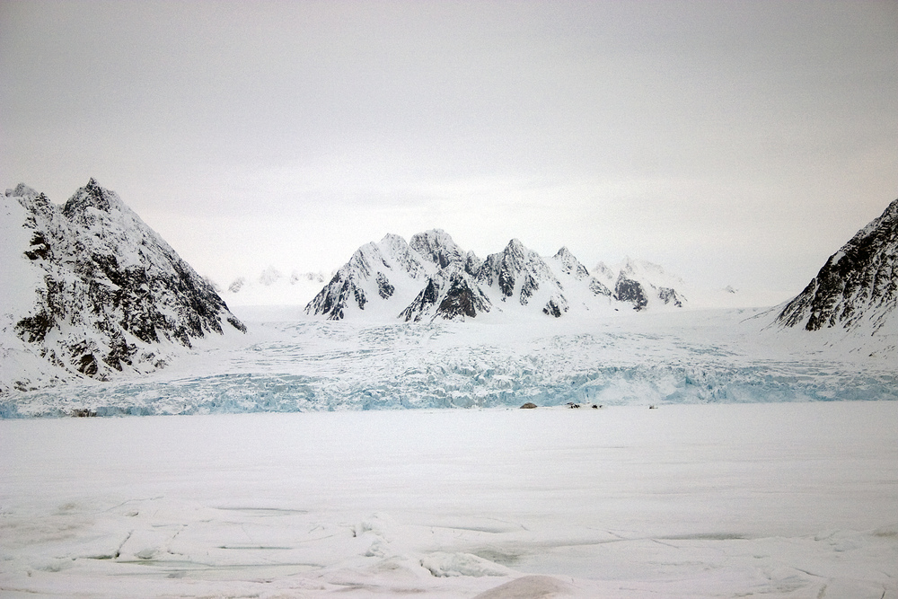 Brear er sensitive indikatorar på klimaendringar. Foto: Trygve Snøtun.