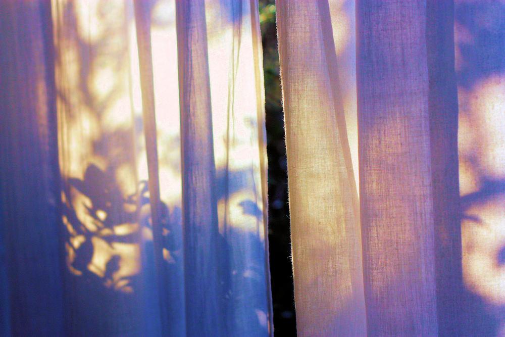 a study in lilac2.jpg