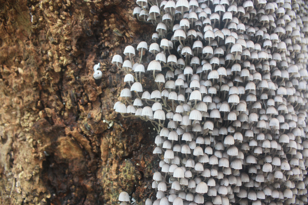 mushrooms on a tree Twin falls maui