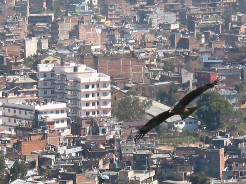 Bird of Prey over Kathmandu (Nepal).JPG