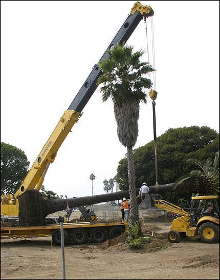 palm lift.jpg
