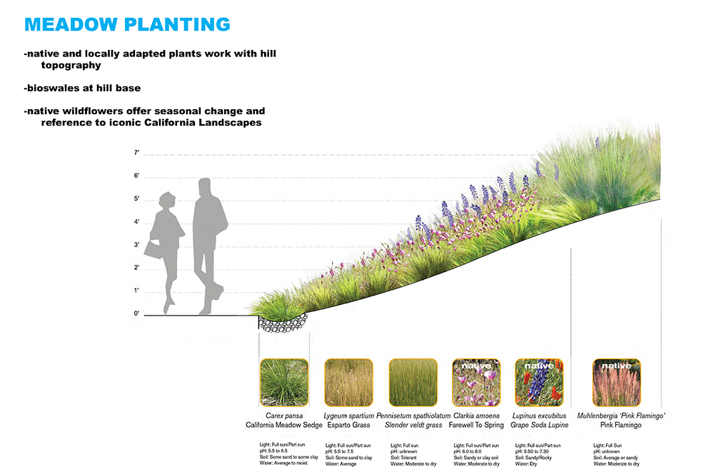 Planting Guidelines: Meadows