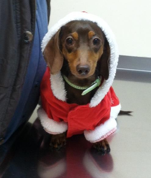 Christmas George