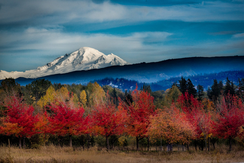 Mount Baker with Fall Foliage
